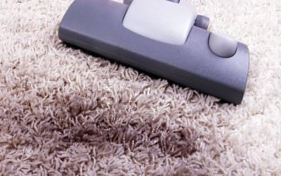 Ten Reasons to Have Carpets Cleaned Year Round